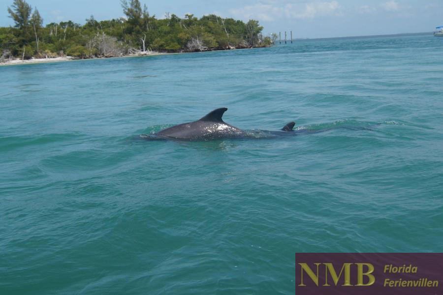 NMB Vacation Rentals